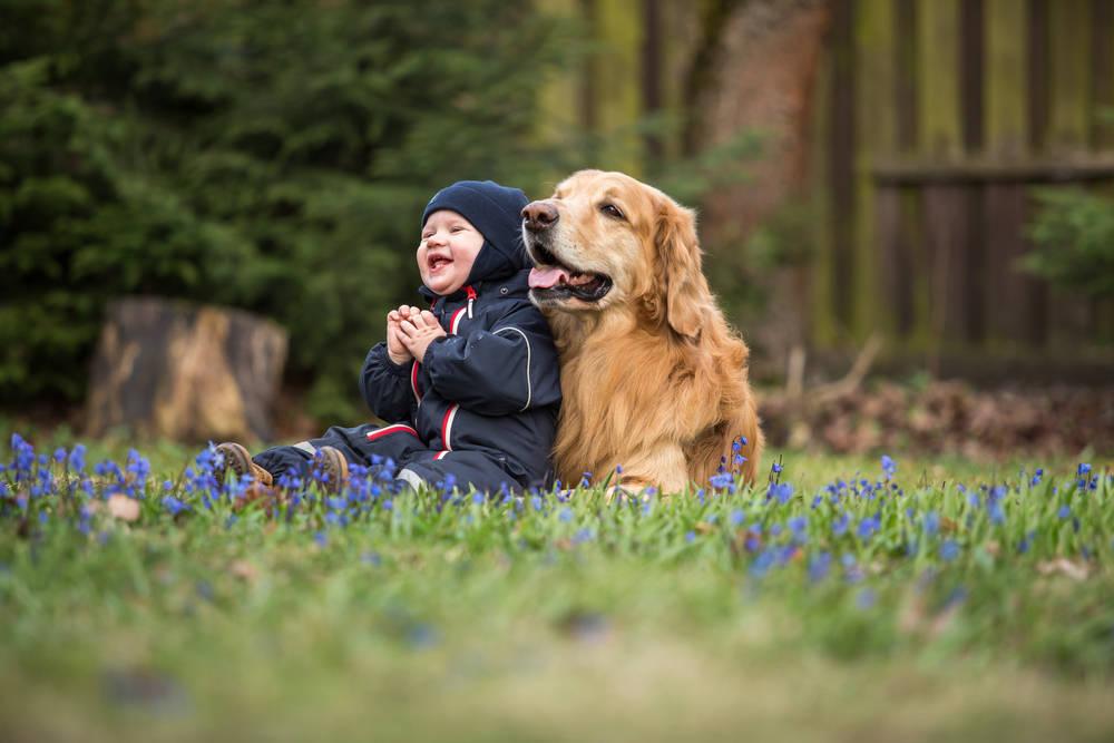 Enseña a tus hijos a respetar a los animales