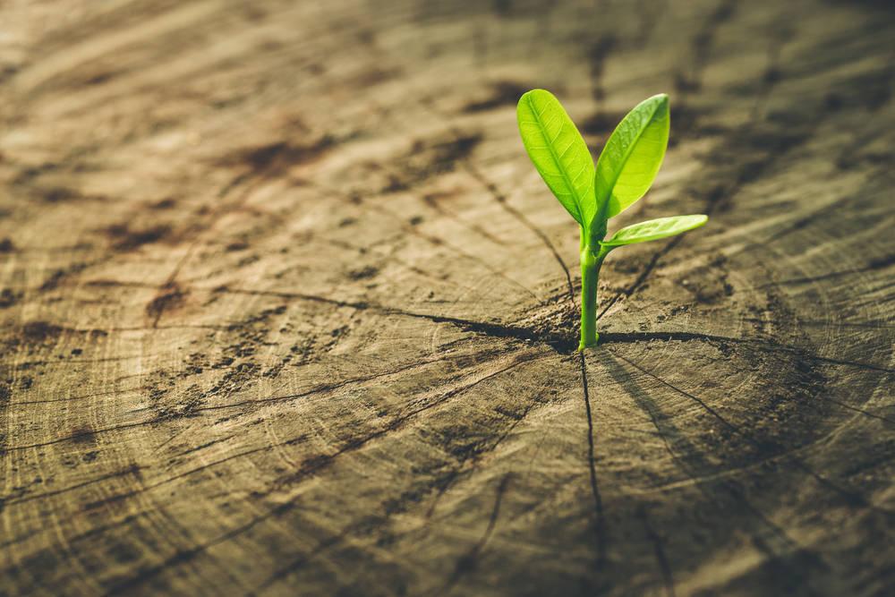 Ayuda a frenar el cambio climático, compra en empresas éticas