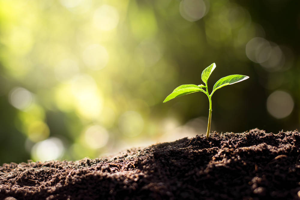 ¿La sostenibilidad del planeta pasa por los productos ecológicos?