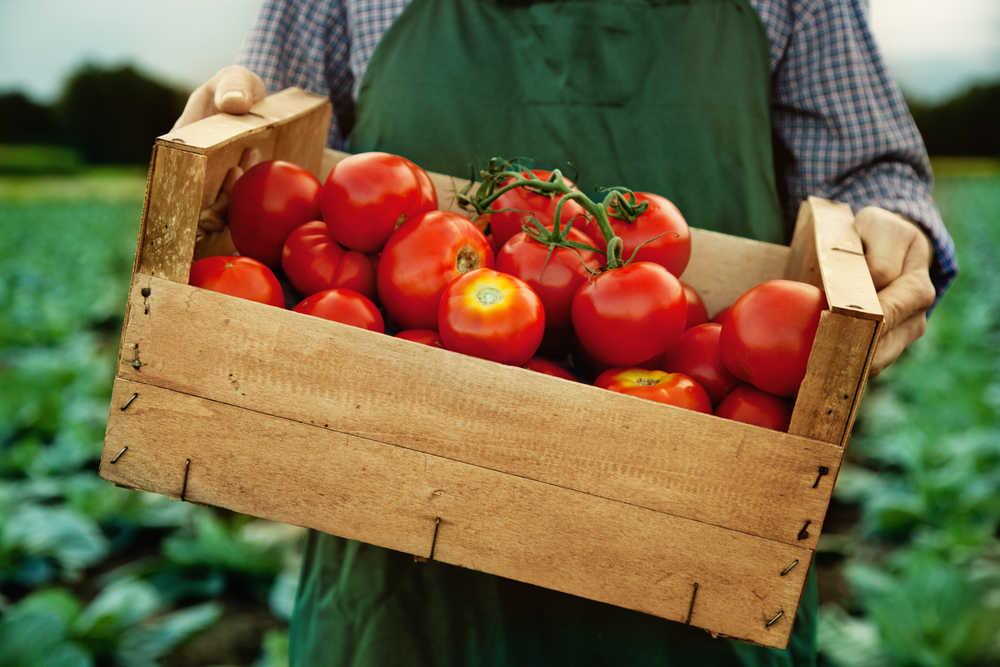 La dieta vegana, la mejor para evitar la obesidad y el sobrepeso