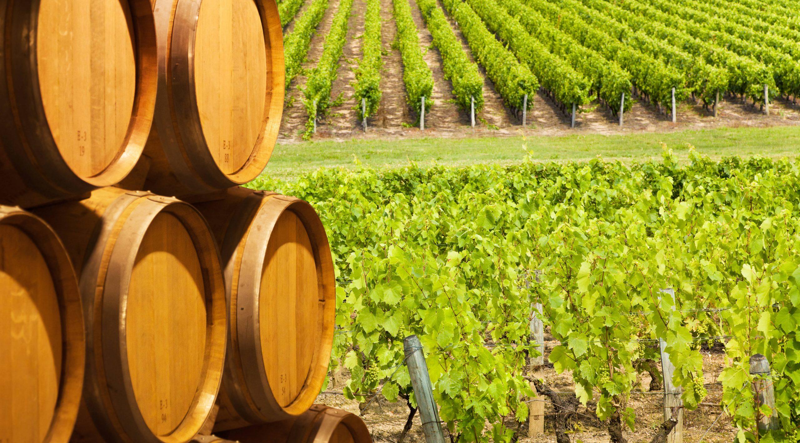 El vino ecológico