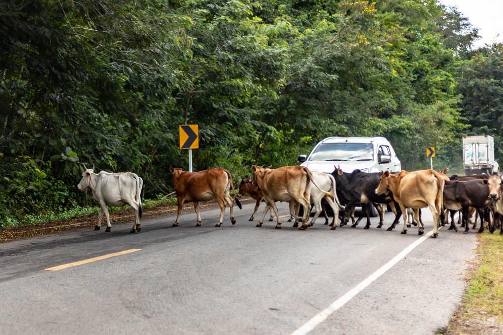 ¿Qué hacer en caso de atropello de animales en carretera?