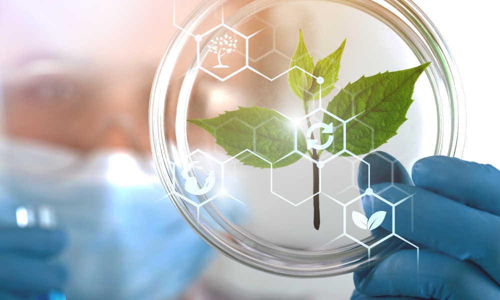 Los extractos de plantas y su éxito